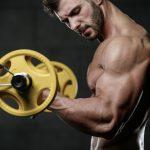 Muskelgruppen – die 6 wichtigsten Muskelgruppen | Muskelmacher Shop